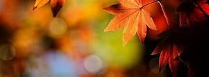 Autumn Graphics Picture: Autumn Facebook Pics