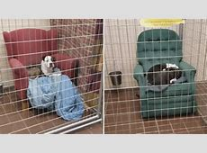 This Animal Shelter Gives Their Rescue Dogs Big Comfy