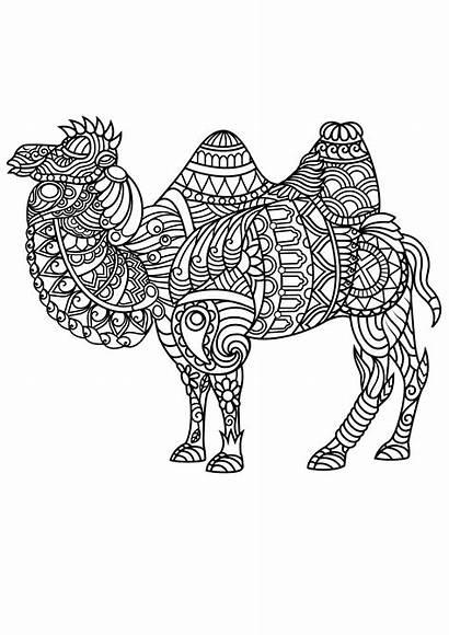 Coloring Mandala Animal Animals Adult Camel Pdf