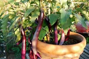 Pflanzen Zu Hause : essbare bl ten und pflanzen in der gartengestaltung 9 tipps ~ Markanthonyermac.com Haus und Dekorationen