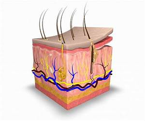 Layer By Layer  Understanding Your Skin U2019s Structure