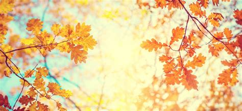 Gold Autumn Wallpapers by We Re Going Through Changes Major Upcoming Regulatory