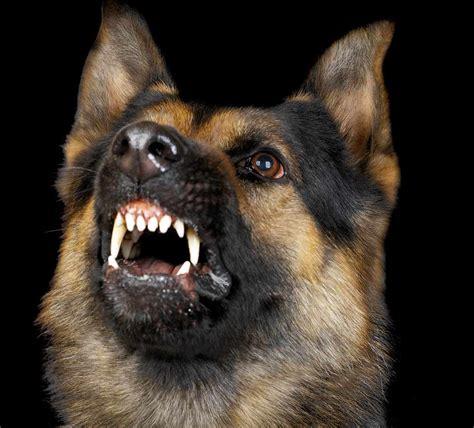 gift   growl christine collins canine behaviour