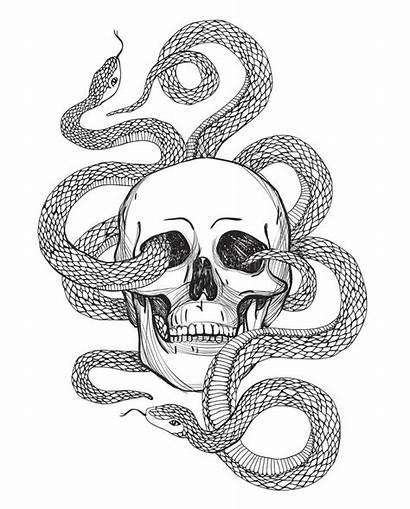 Snake Skull Illustration Tattoo Coloring Hand Vector