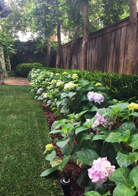 landscape ideas  solutions  shade
