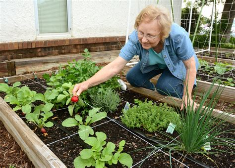master gardeners their knowledge herald citizen