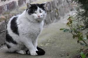 Katzen Im Hohen Alter  U2013 Tipps Zum Umgang Mit Seniorkatzen