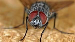 Se Débarrasser Des Mouches Naturellement : 10 trucs de grand m re pour chasser les mouches de la maison ~ Melissatoandfro.com Idées de Décoration