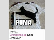 25+ Best Memes About Grumpy Cat and Puma Grumpy Cat and