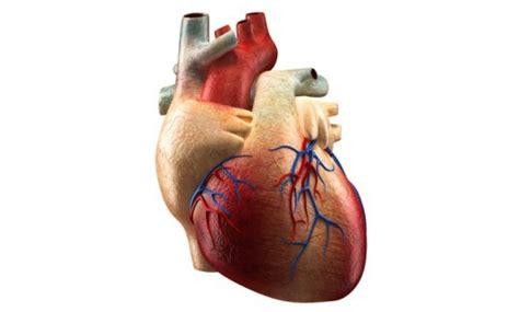 Lab-grown Human Heart « Inhabitat