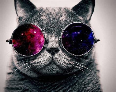 Cool Cat Wallpaper Hd Download Hintergrundbilder 1280x1024 Nette Katze Mit Sonnenbrille Sehr Cool Hd Hintergrund