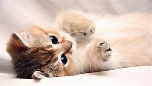 Funny And Cute Cat Pictures 12 Wide Wallpaper ...