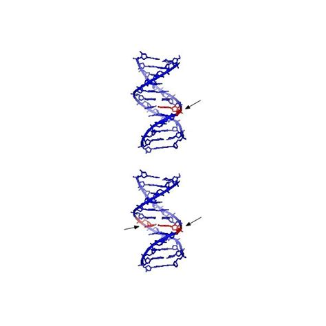 what do the letters dna stand for what does dna stand for deoxyribose nucleic acid 5479