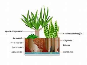 Hydrokultur Pflanzen Kaufen : hydrokultur pflanzen hydrokultur pflanzen archive hydrokulturen begr nungen mietpflanzen b ~ Buech-reservation.com Haus und Dekorationen