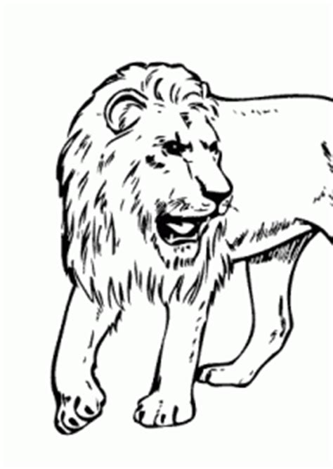 lion real animals coloring pages  kids printable  coloing kidscom
