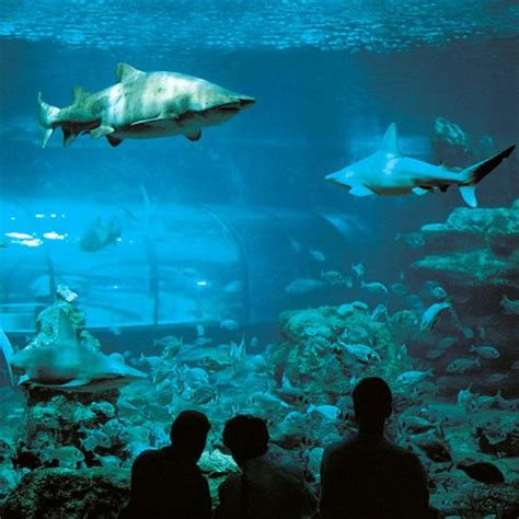 l aquarium de barcelone l aquarium de barcelona spain top tips before you go tripadvisor