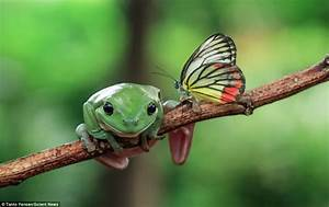 Frog Appears To Have A Mohican Haircut After Butterfly