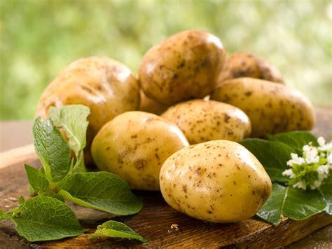 la culture de la pomme de terre agronomie