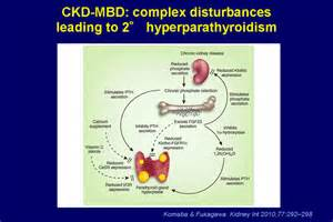 Figure 1.Chronic kidney disease-associated mineral and bone disorder ...  Parathyroid Disorders Hyperparathyroidism