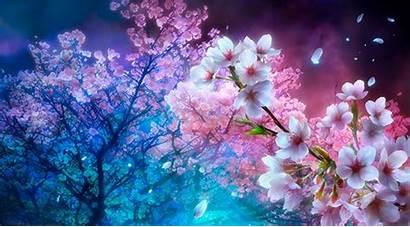 Cherry Blossom Anime Blossoms Wallpapersafari