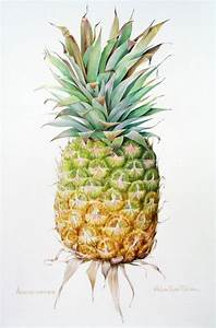 Ananas Comosus ~ watercolour by Helen Eyre Pikler. i ...