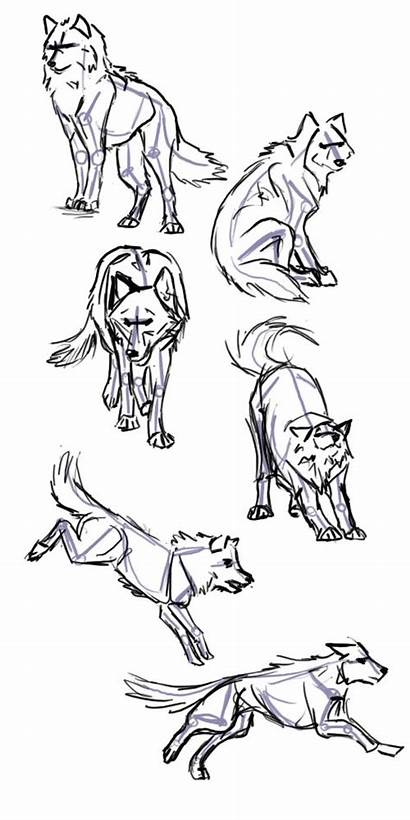 Wolf Drawing Poses Drawings Animals Deviantart Draw