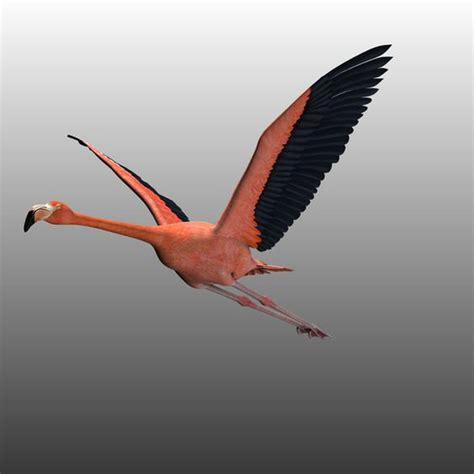 can flamingos fly pinterest the world s catalog of ideas