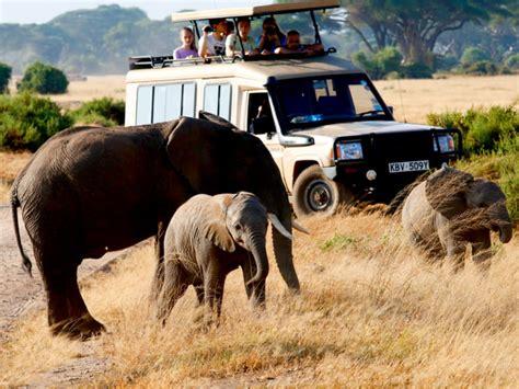 What to take on a safari holiday - Saga