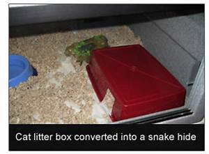 snake hides are important for snake health here39s why With why should you concern on litter box cover
