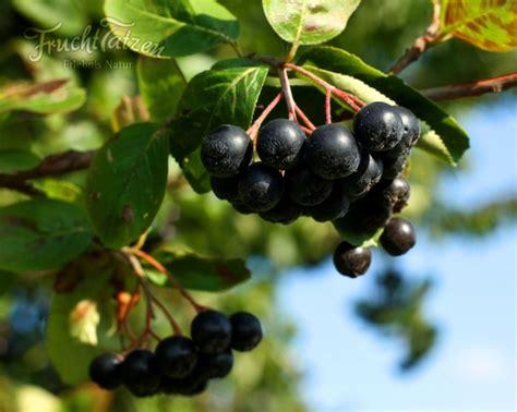 erdbeere aronia fruchttatzen