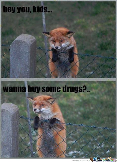 Fox Memes - fox memes best collection of funny fox pictures