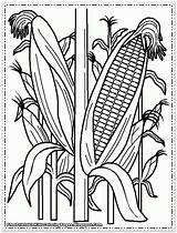 Corn Coloring Pages Printable Cornfield Indian Cob Field Plant Wheat Stalks Drawing Sweet Farm Print Preschool Sheets Drawings Food Cool sketch template
