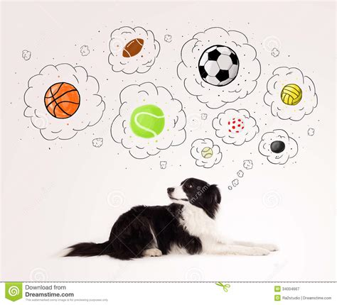 Cute Dog With Balls In Thought Bubbles Royalty Free Stock
