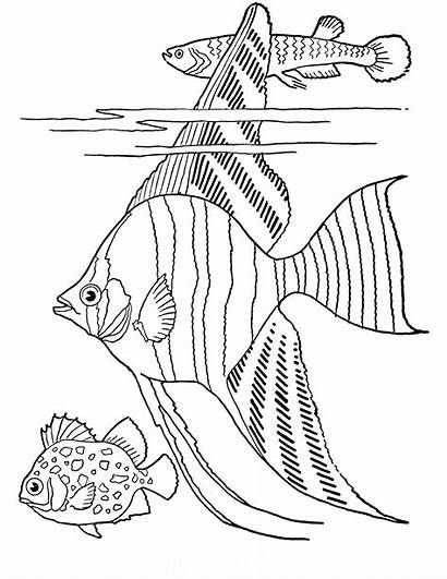 Coloring Adult Fish Printable Tropical Fairy