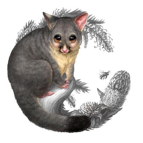 possum clipart opossum pencil   color possum