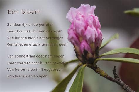 bloem gedichtje gedicht een bloem gedicht bloem foto
