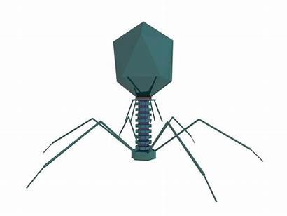 Virus Como Materi Bacteriophage Batteri Sma Hewan