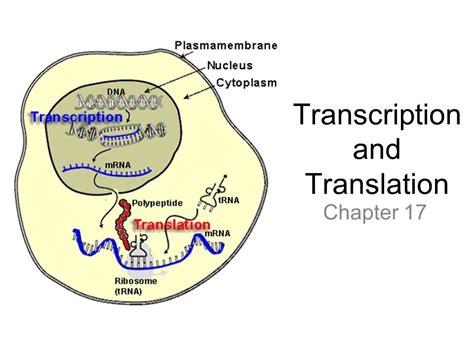 Transcription And Translation  Ppt Video Online Download