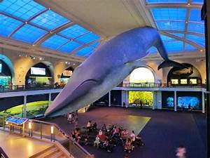 Hall of Ocean Life - Picture of American Museum of Natural ...