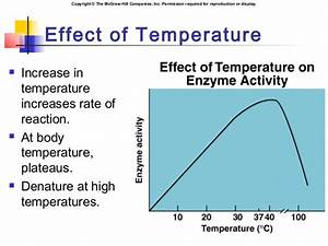 Chapter04 Enzymes And Energy
