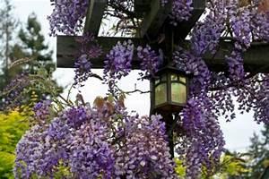 Support Plantes Grimpantes : murs treillages pergolas tonnelles quel support pour ~ Dode.kayakingforconservation.com Idées de Décoration
