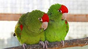 199 best Cuccioli & Co / Pets images on Pinterest Cubs, Animal babies and Animales