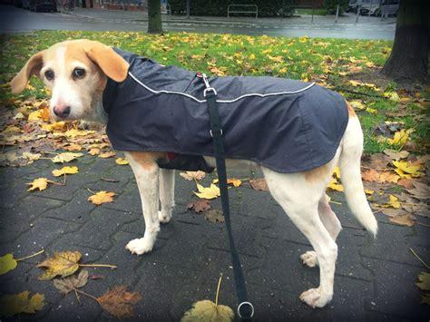 ruffwear aira regenmantel hund seite  kommst du hierher