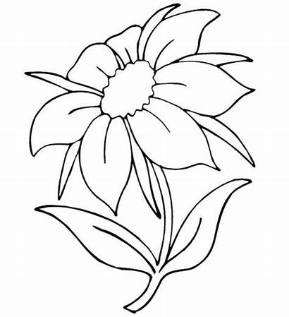 Pages Coloring Flowers Flower Printable Nature Outline