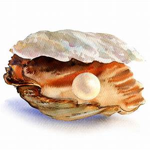 Open Oyster Shell With Beautiful White Pearl Isolated ...