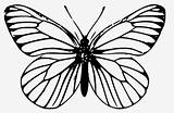 Butterfly Clipart Monarch Clip Outline Coloring Drawing Transparent Pngitem sketch template