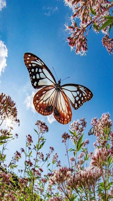 brown butterfly butterflies flying beautiful