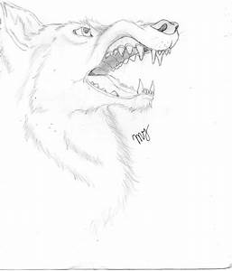 The gallery for --> Wolf Snarl Drawing