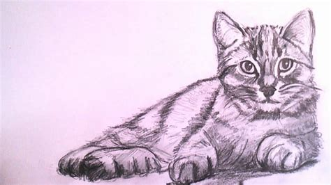 How To Draw A Realistic Cat With Pencil Step By Step