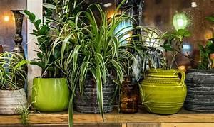 Pflanzen Für Gesundes Raumklima : luftreinigende pflanzen schadstoffe los werden ~ Indierocktalk.com Haus und Dekorationen